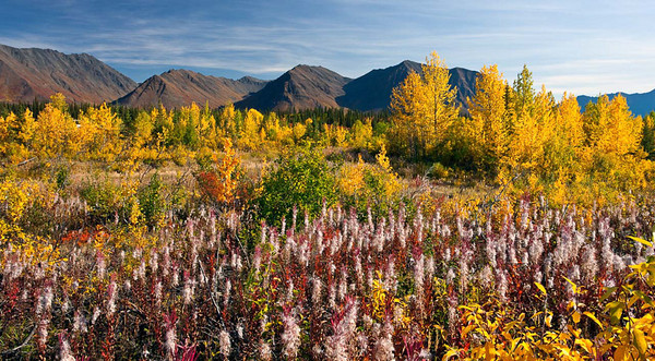 Colorful Wild Plants Near Denali
