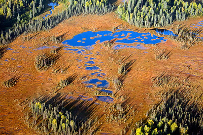 Ariel View of Boreal Forest