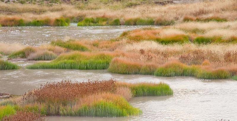 Yellowing Grass