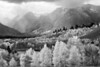 Aspen and Mt Moran_2_BW