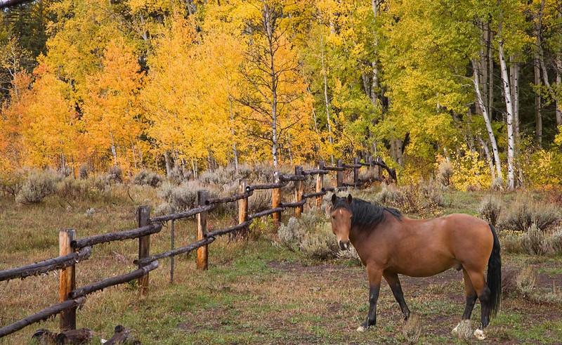 Horse at Littler's Ranch
