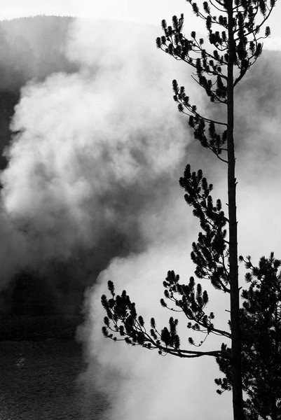 Tree and Smoke