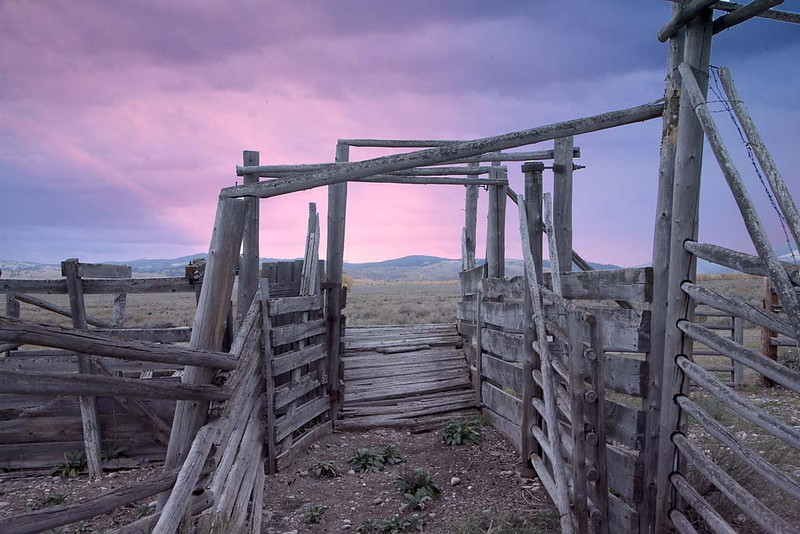 Morning Glow in the Corral