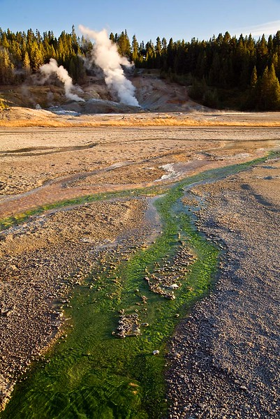 Green Thermophile near Geysers