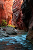 At the Narrows, along the Virgin River, Zion NP