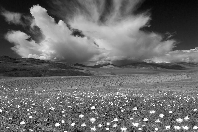 Spring at Death Valley National Park