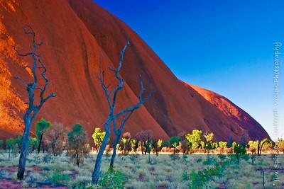 Uluru Evening with Blue Trees