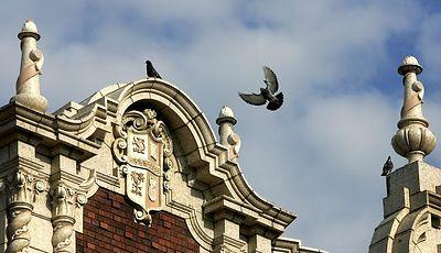 Birds in flight on theatre 3004