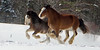 Buddy (on the outside) a 2 and 1/2 year old clydesdale, born on Marilyn's farm from Dolly, a rescued Premarin mare.