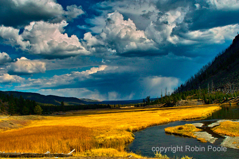 Madison Meadows, Madison River in YNP