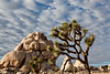 Joshua Trees National Park
