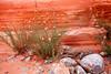 Wild Flower rock