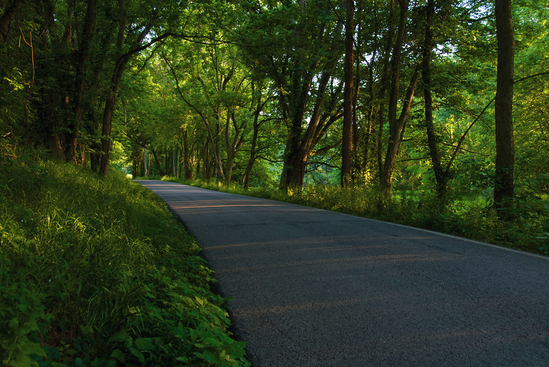 Country Lane at Sunset