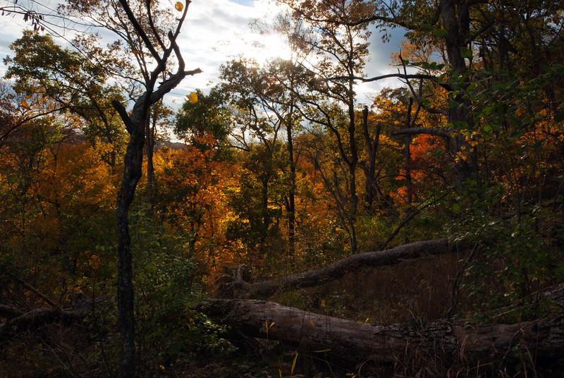 Boone County Cliffs State Nature Preserve
