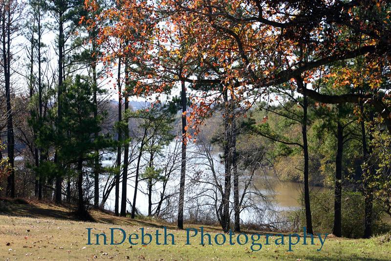 0921 Ft. Smith trees
