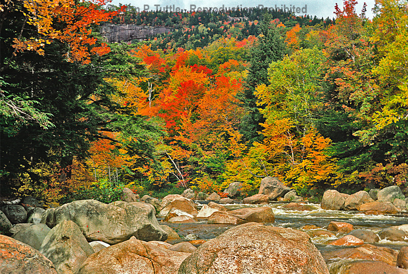 North Conway Foliage