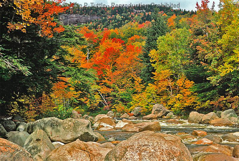 North Conway Foliage