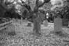 Family Graveyard, Avon