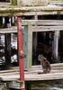 Avon Harbor cat pack