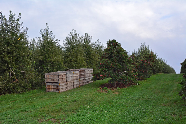 PEACE VALLEY ORCHARD 2018