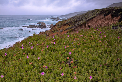 Ice plants at Garrapata