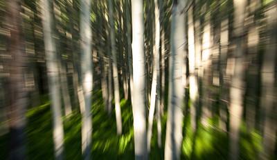 Aspen Grove zoom blur Kebler Pass Road