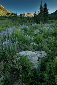 Rocks and lupines Gothic Road