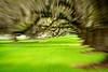 Oaks & Moss zoom blur