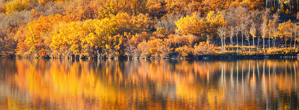 Fall color at Kolob Reservoir, late afternoon outside Zion National Park Springdale, Utah  10-14-12