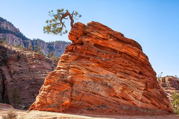 Bonsai Tree on rock, after sunrise