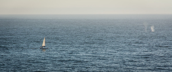 I caught a whale spouting!!! Look on the right near the horizon!