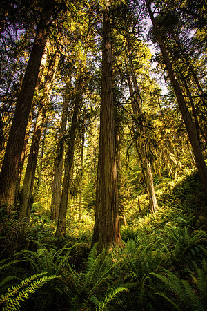 Cypress Falls Park, British Columbia