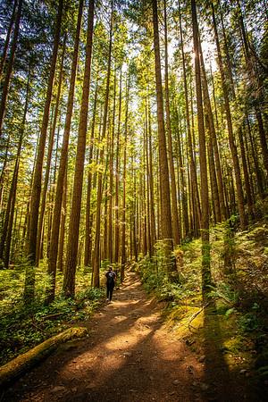 Pacific Spirit Park, Vancouver