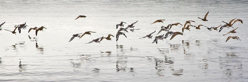 13) Sea Birds 201201261953