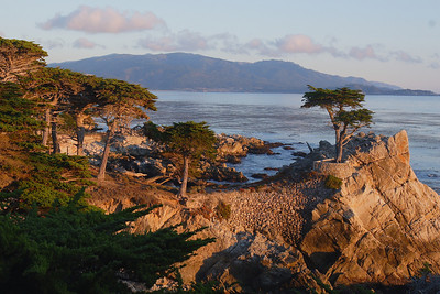 Lone Cypress wide shot.