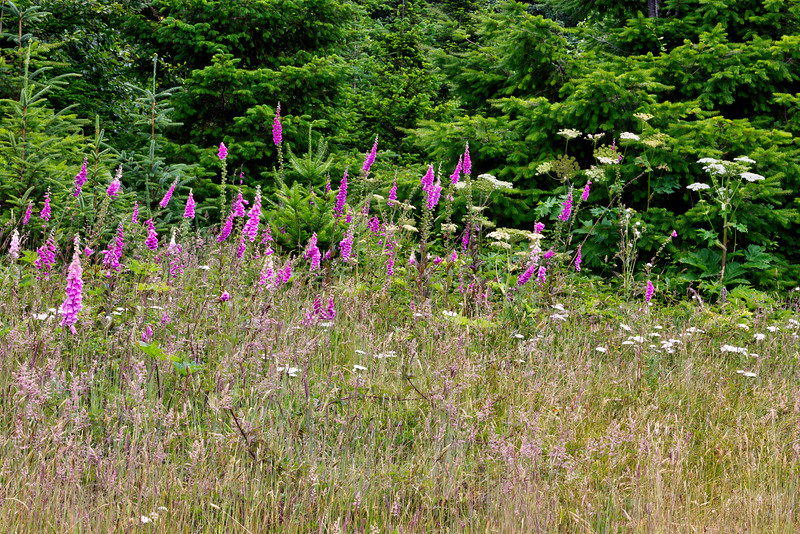 Flowers and Trees At Arch Rock Parking Area - Samuel H. Boardman State Scenic Corridor, OR