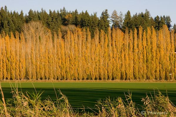 King County Fields