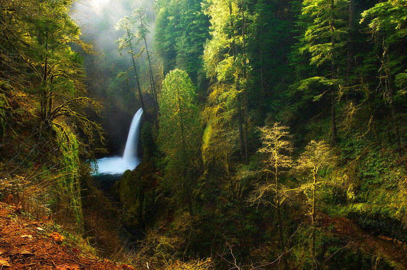 Morning light breaks through the fog and mist at Metlako Falls in Columbia River Gorge, Oregon