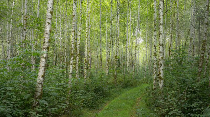 Path through the Rain Forest