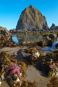 tide pools july 2012