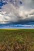 12.  Prairie Grasslands