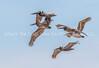 28.  Prehistoric Flight