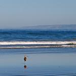 Reflections of the bird along the shore.  Pajaro Dunes, California