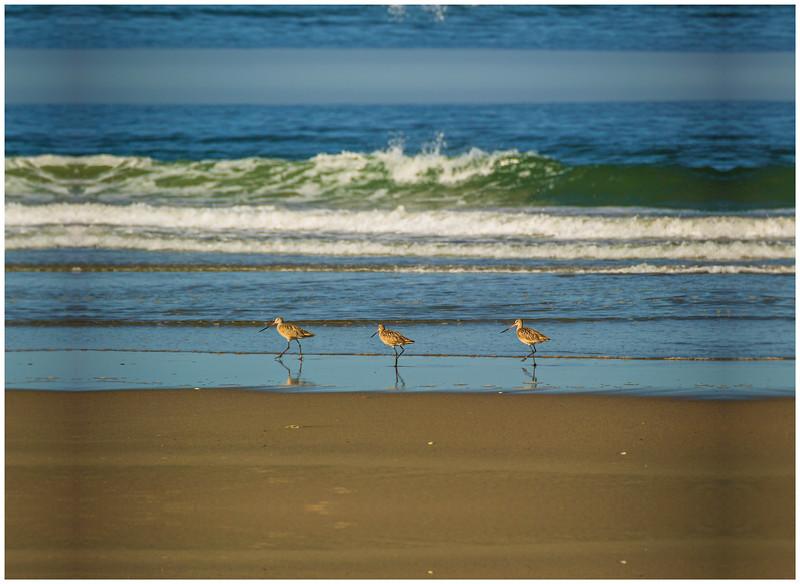 3-Birds-Pajaro-Dunes-Sandpiper-California-Coastline-DSC_6904 PRINT 12x18v2 WRAP final