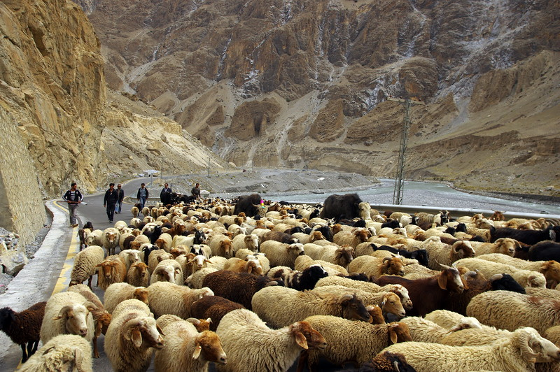 On the way up to Khunjerab Pass -traffic jams are one of the biggest dangers on the Karakoram Highway