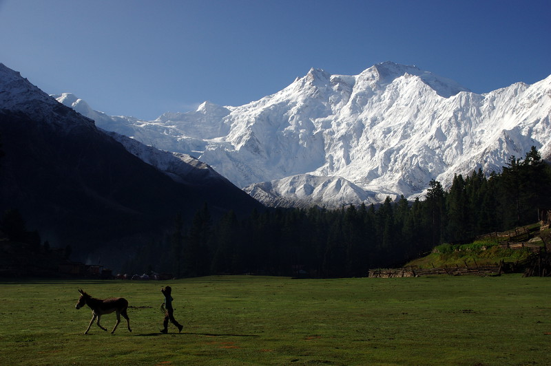 Fairy Meadows - the place to be with splendid views over Nanga Parbat (8126 Meter)