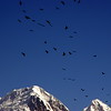 Eagles in Hunza