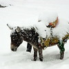 Donkeys at Nanga Parbat, freezing to death