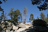 We hiked at the Mountain Station of Mount San Jacinto SP. The air was crisp. The sky was clear. We enjoyed the exercise and the beauty of God's creation.