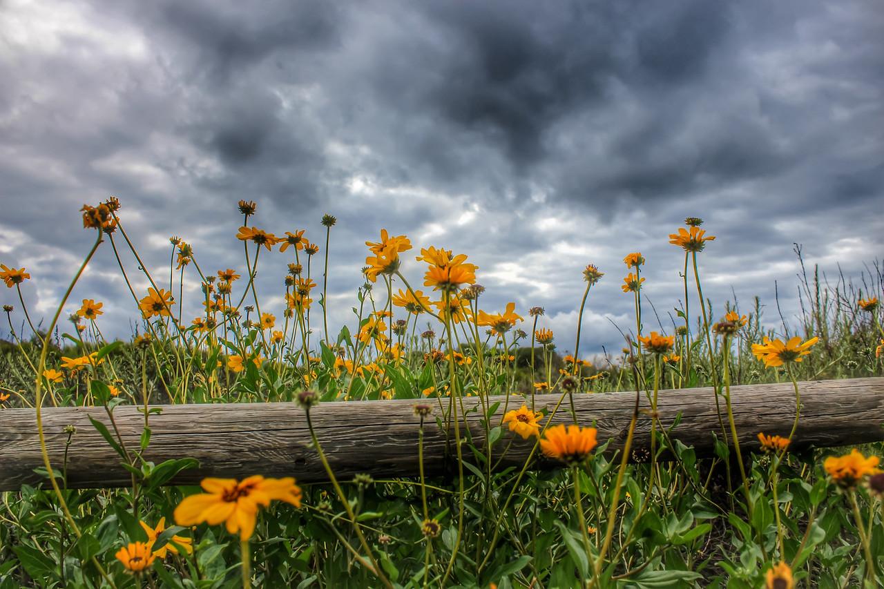 Palos Verdes Wildflowers